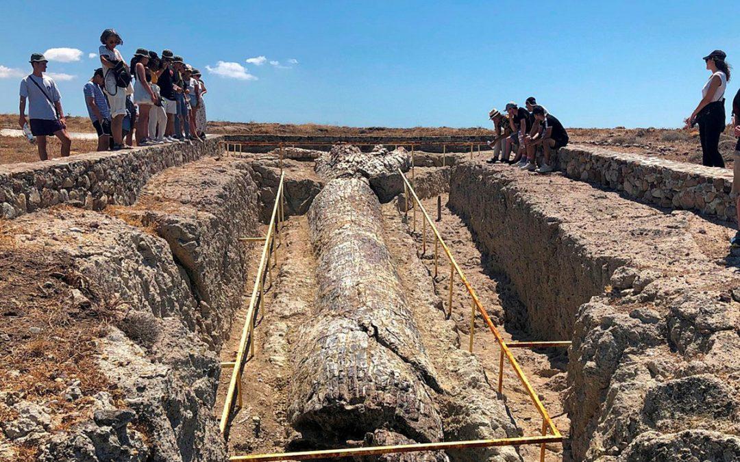 Δυο γιγάντιοι κορμοί δένδρων αποκαλύφθηκαν σε ανασκαφές στο Απολιθωμένο Δάσος της Λέσβου
