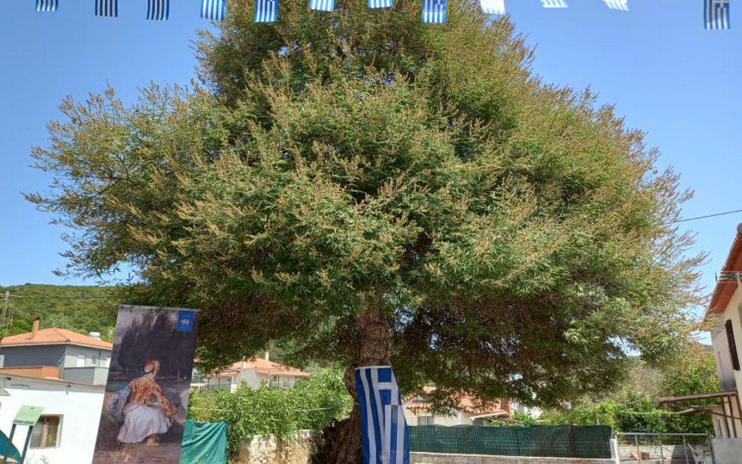 Πρώτη επετειακή εκδήλωση σήμανσης Δέντρων Ελευθερίας Πελοποννήσου